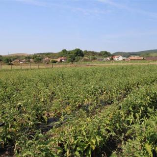 La Cluj s-a deschis o ferma de legume bio in stil american