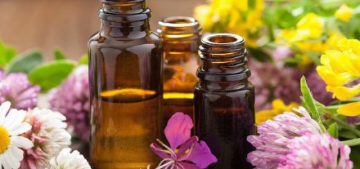 3 solutii naturiste care tin la distanta gandacii, tantarii si insectele