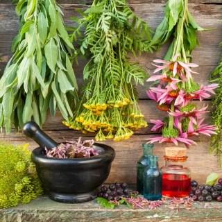 Asa trebuie sa arate gradina de supravietuire Descopera plantele folosite in ultimul mileniu pentru a vindeca diverse afectiuni!