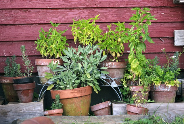 8 plante medicinale care pot fi cultivate in casa