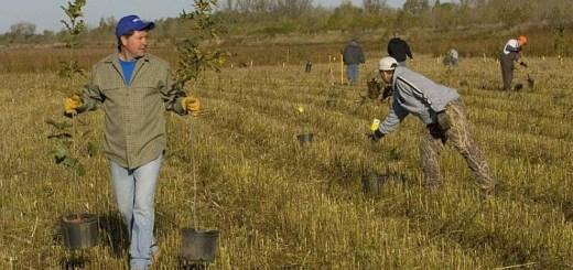 sfaturi utile pentru plantarea pomilor toamna