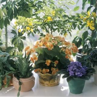 Flori care nu trebuie tinute la caldura mare