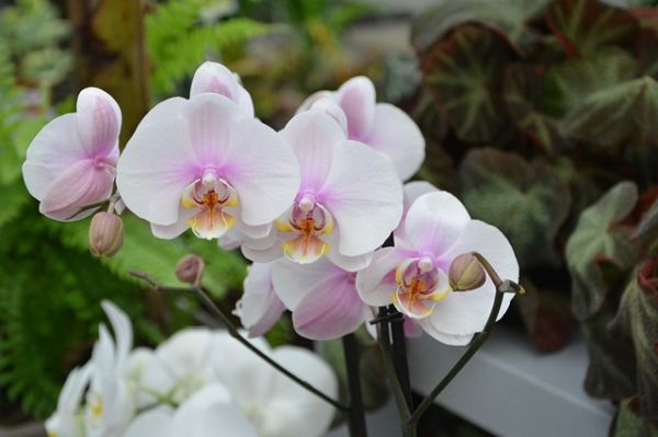 Cat de des se uda orhideea si alte 9 curiozitati despre aceasta floare