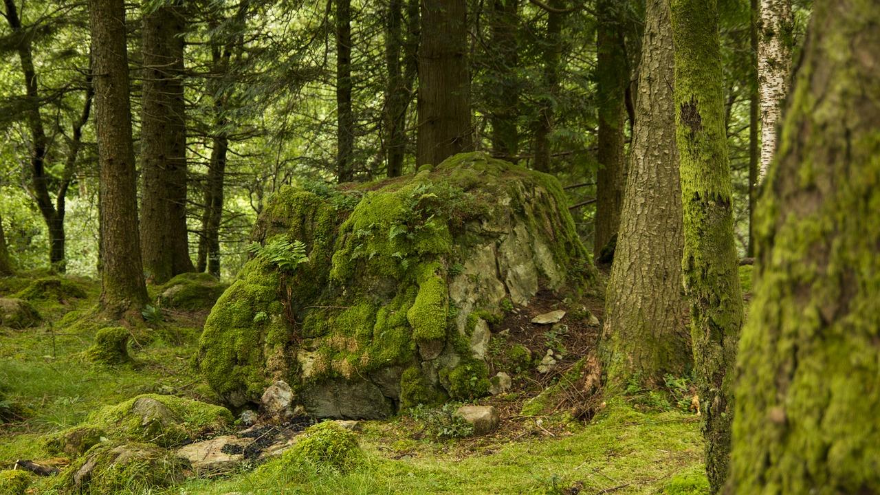 Lichenii de piatra. Un remediu cum nu se poate mai bun pentru o serie de afectiuni suparatoare