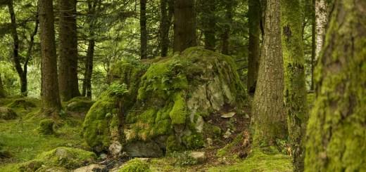 lichenii de piatra