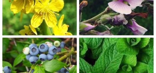 plante medicinale utile in stomatita