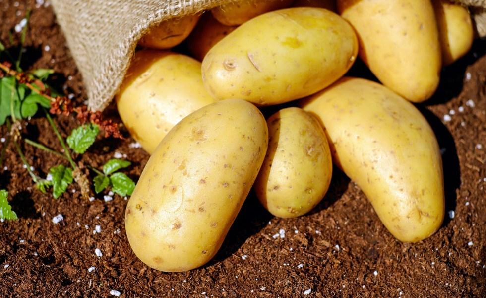 Cartofii. Proprietatile si beneficiile unor legume controversate