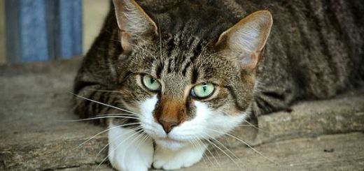 mituri-si-legende-despre-pisici