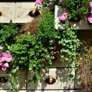 flori-curgatoare-pentru-jardiniere