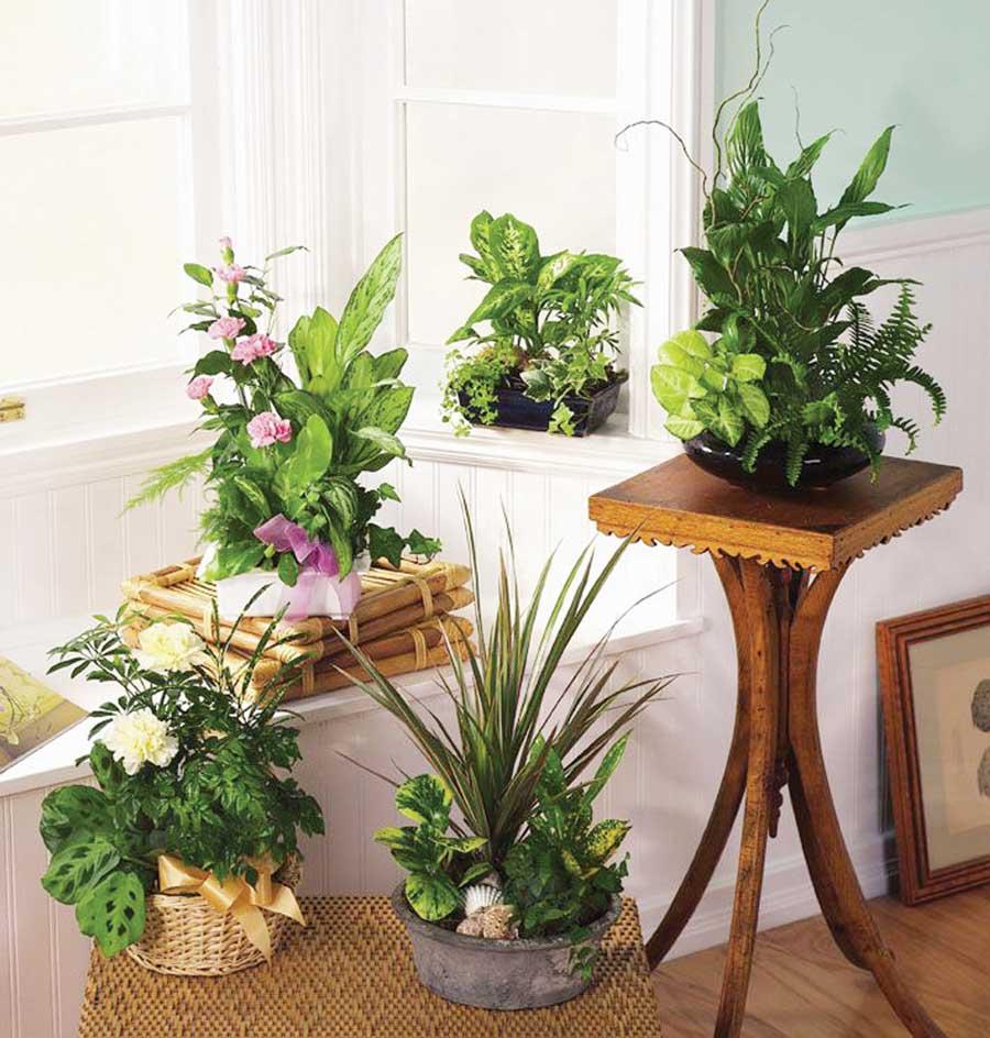 Top 5 cele mai sanatoase plante de interior. Ce sa iti pui la birou sau in locuinta