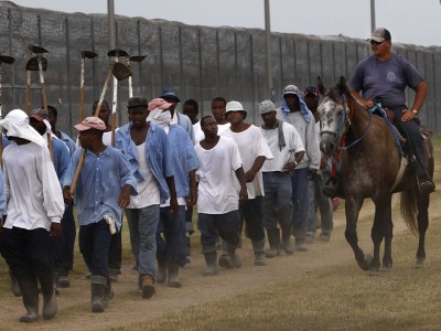 Angola prisoners return from farm work, web