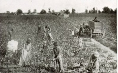 Demanded of sharecroppers was their forced labor, here picking cotton in Mississippi in the 1880s.