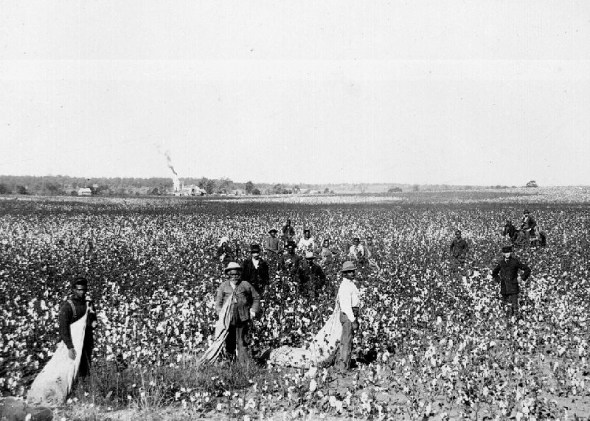 Blacks picking cotton in the U.S. in 1897