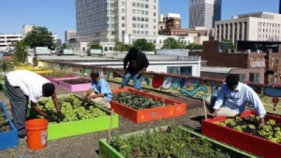 Residents grow much of their own food in the organic rooftop garden at Metro Atlanta Task Force for the Homeless.
