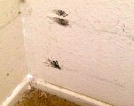 Mold regrows in Liz' upstairs bedroom. – Photo: Liz Washington
