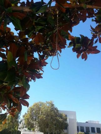 This noose on the Berkeley High School campus was photographed by an unknown person on Oct. 1, 2014, but not reported by the administration to the students for eight days.