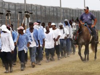 Angola prisoners marched to farm work, web