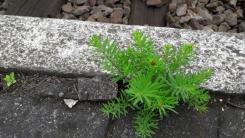 perronplanten_12