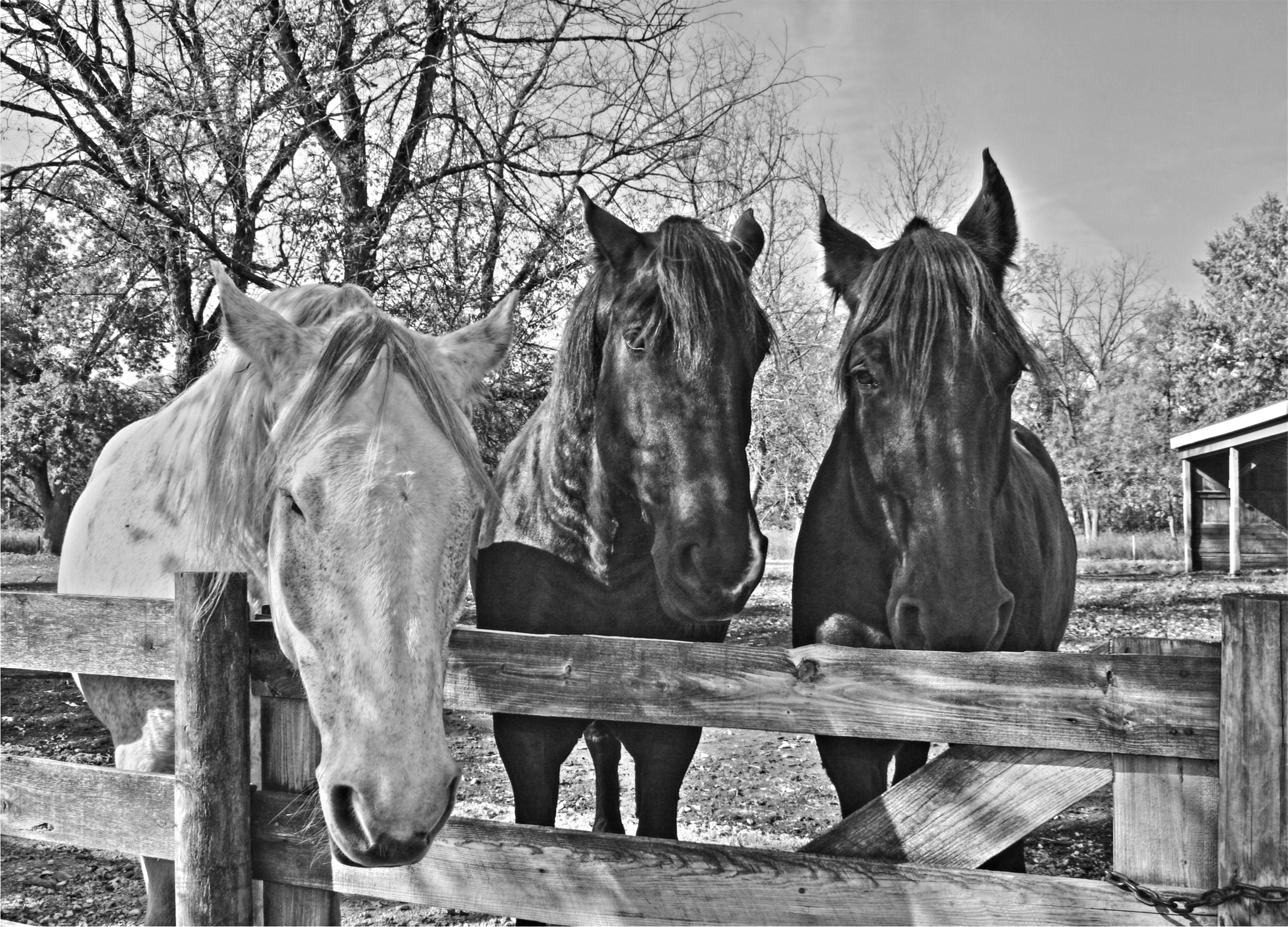 Cee S Black Amp White Photo Challenge Down On The Farm