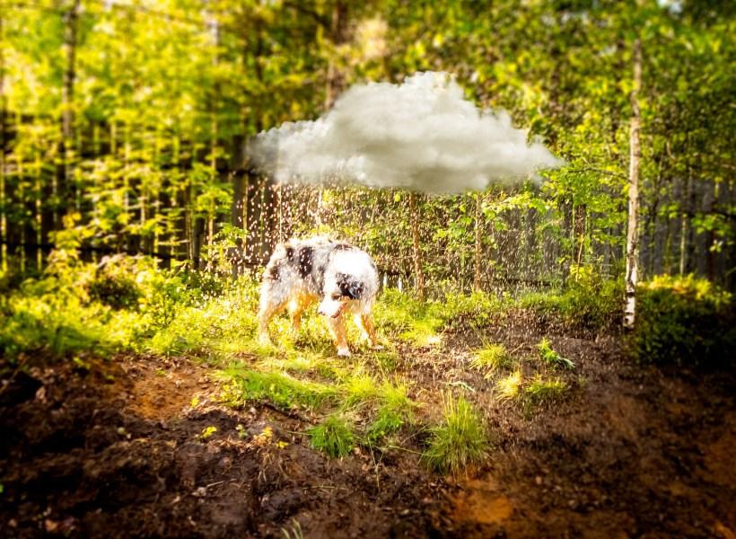 Аусси Дейзи с недовольной мордочкой под дождевым облаком
