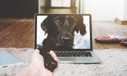 Ноутбук MacBook стоящий на мягком белом коврике, из монитора которого выглядивает собака породы лабрадор и протягивает лапу навстречу человеческой руке из-за кадра.