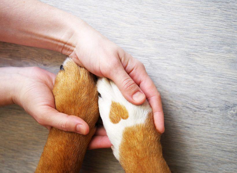 Руки человека сжимают лапы собаки в виде сверху. На одной из лап собаки пятно в виде сердца.
