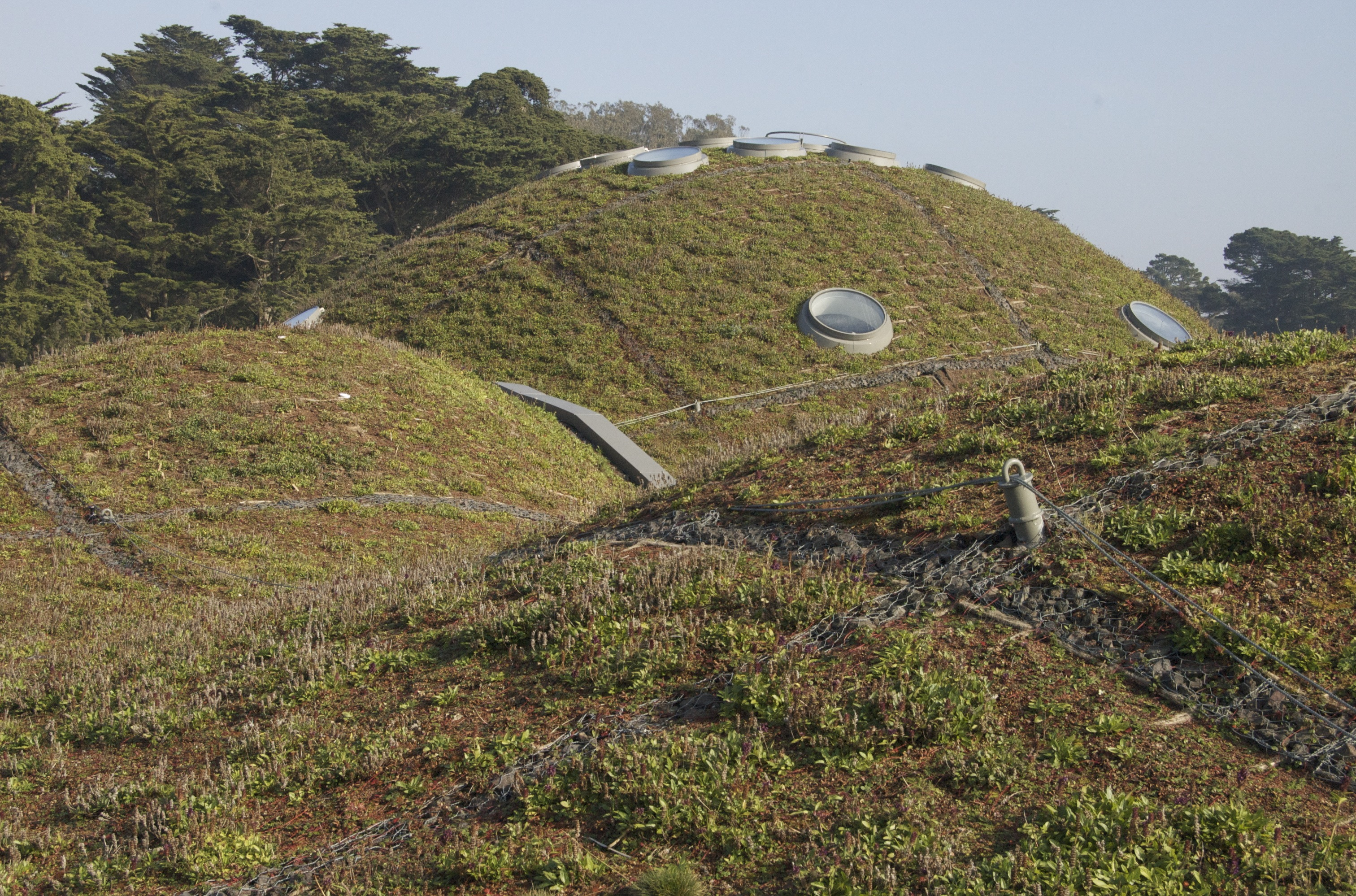 Roof of the California Academy of Sciences
