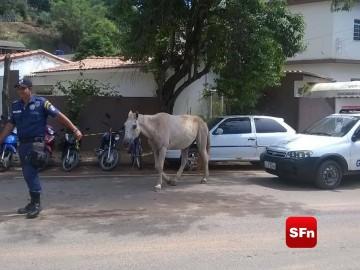 animais de Itaocara 2