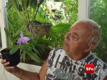 orquídea bernadino