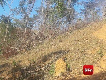 área desmatada em pádua 6