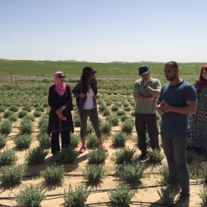 Agricultural sustainability project at Wadi Atir.