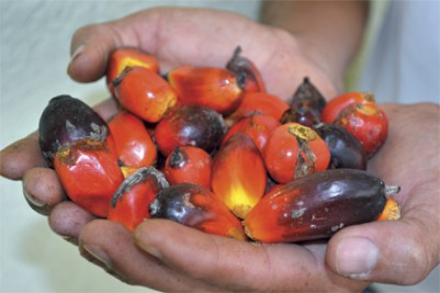 3_Hands_Red_Palm_Berries