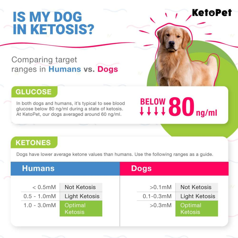 "Image from KetoPet Facebook group August 2019: ""Is My Dog in Ketosis? Comparing target ranges in Humans 👵and Dogs 🐩"""