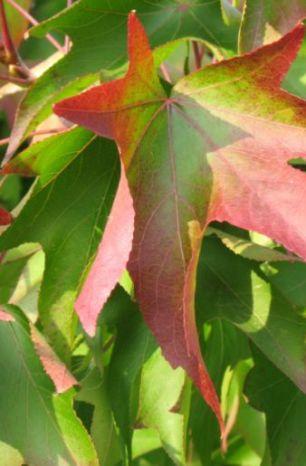 In autunno NON si pota
