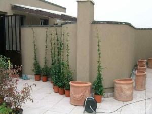 Anche per le piante in contenitore la stagione migliore resta l'autunno.