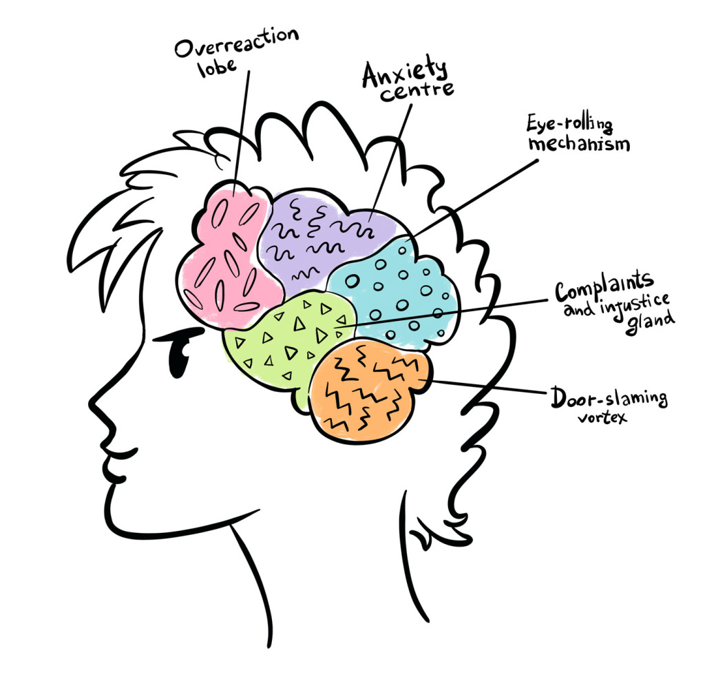 The Limbic System The Accelerator In A Teenage Brain