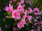 DubocePark_012514_06new