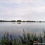 Dalldorfer See, Schaeferbuschsee Westufer