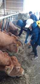 """12.10.2018: 5ab sagt am Umwelttag den Kühen der Familie Streicher """"Guten Tag!"""""""