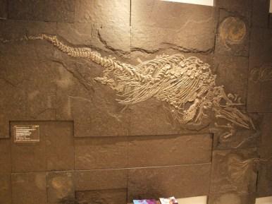 10.12.2017: Aalener Urgestein - der Ichthyosaurier