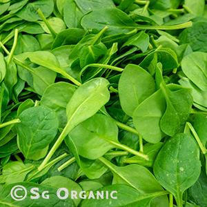 baby-spinach_sgo