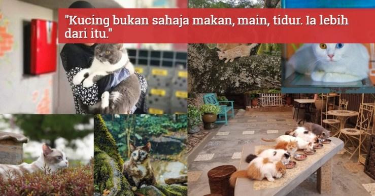 tips bela kucing