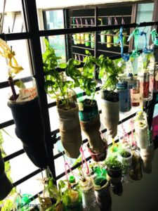 Vertical Hydroponic Gardens
