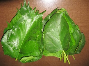 Mulberry plant leaves are edible too