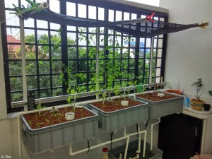 Aquaponic window farm
