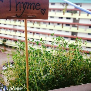 Tips to grow thyme