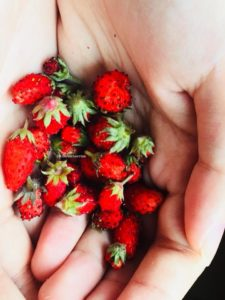 Best ways to grow strawberries from seeds