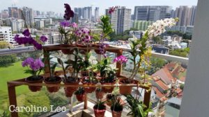 Singapore private gardens