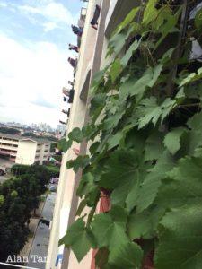 Grow growers in Singapore