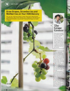 Her World magazine on grapes growers in Singapore